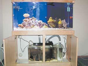 Морская вода для аквариума как сделать